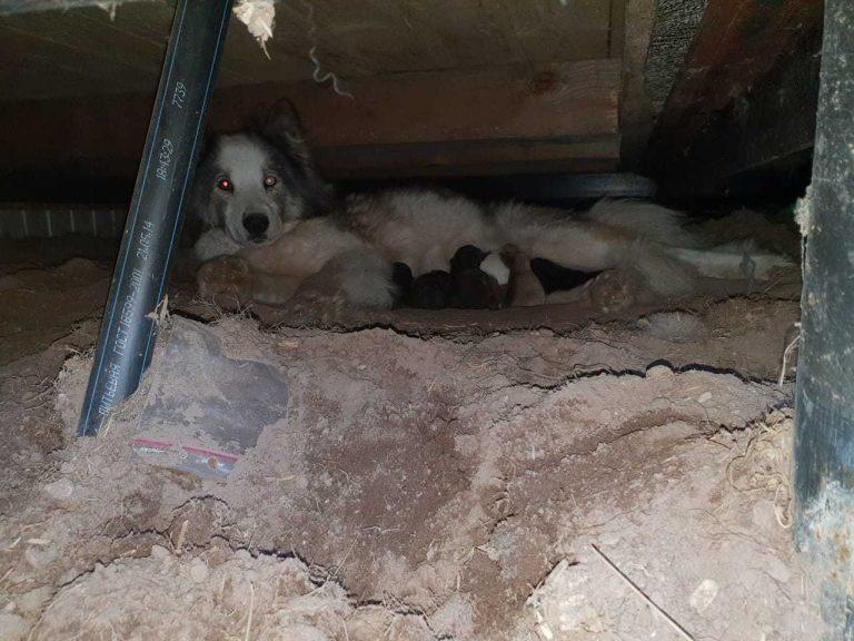 У Дніпрі невідомі замурували під землю бездомних собак (ВІДЕО)