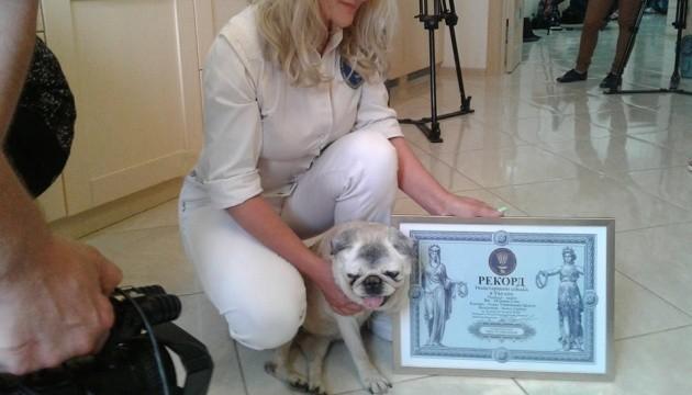 Найстаріший пес в Україні помер у 19,5 року