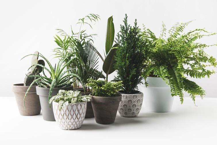 Чому кімнатні рослини не приносять вам користі – пояснюють вчені
