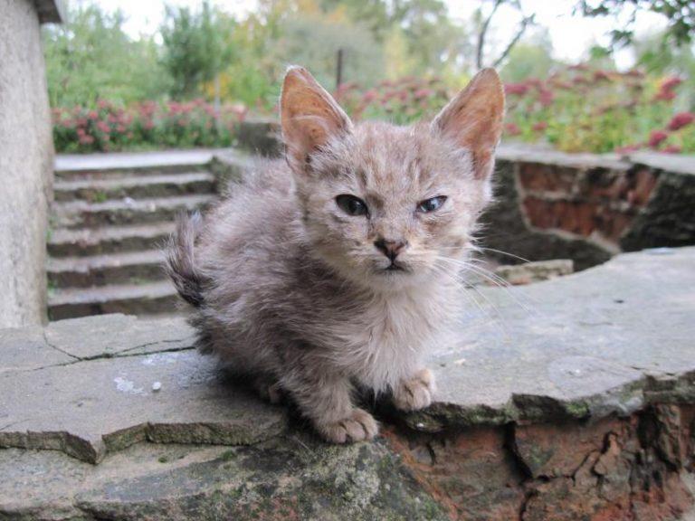 Бабуся підібрала мале беззахисне кошеня з вулиці. Хіба ж знала старенька, що станеться через декілька років…