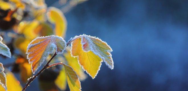 Аномальна погода. Синоптики шокували прогнозом. Зими не буде?