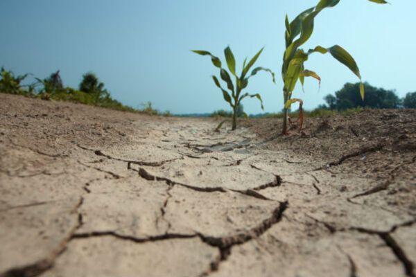 Україна засохне: кліматологиня налякала погодою через 10 років
