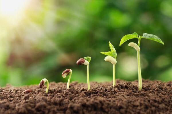 Посівний календар на квітень 2020 в Україні: що і коли садити