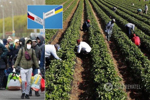 Чехія опинилася на межі катастрофи без українських заробітчан