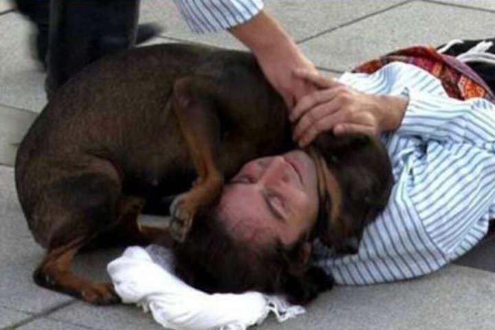 У Туреччині перервали виставу через зворушливий вчинок собаки (відео)