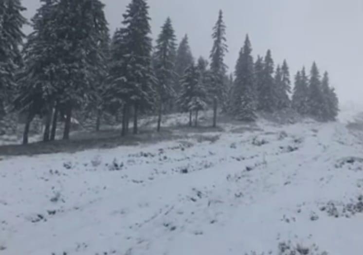 Карпати засніжило, випало до 7 см снігу (відео)
