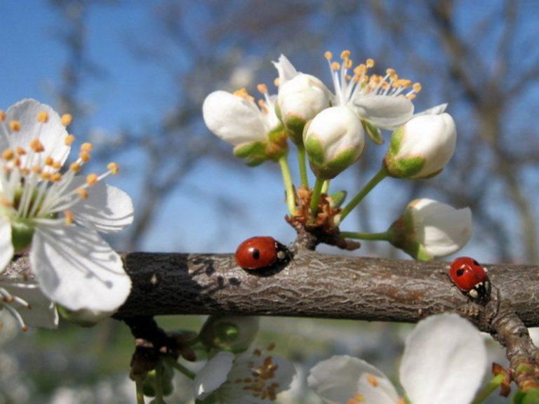 В Україну прийде справжня весна: очікується до +16°C