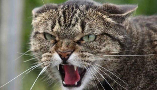 На Київщині через скаженого кота закрили на карантин 11 сіл