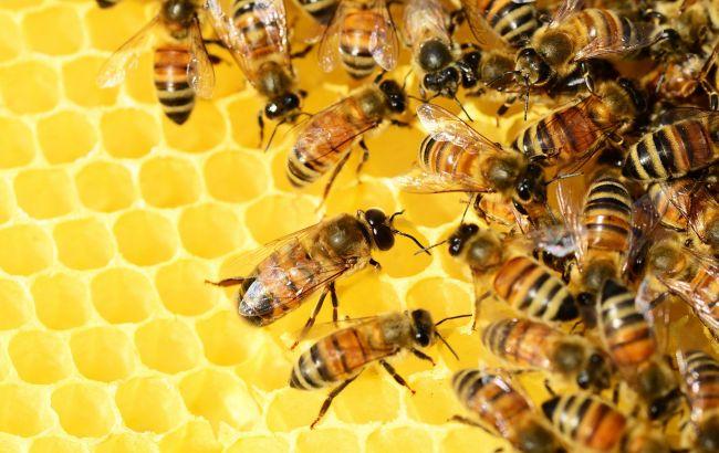 Страшна смерть: під Рівним бджоли атакували пасічника