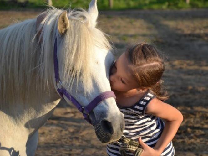 На Львівщині кобила відкусила щоку 5-річній дівчинці
